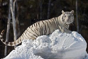 """В зоопарке, который находиться в парке """"Солнечный остров"""" своими глазами увидеть экзотических животных и даже погладить некоторых из них"""