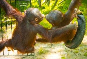 В Краснодарском зооперке собраны уникальные животные со всего мира