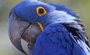 В Сафари-парке в Краснодаре можно увидеть экзотических животных и птиц