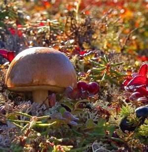 Что бы не отравиться в походе, нужно знать признаки ядовитых растений
