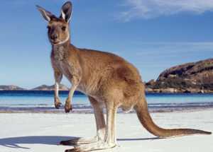 Главные достопримечательности государства Австралия и крупнейших его городов с описаниями, названиями и фото