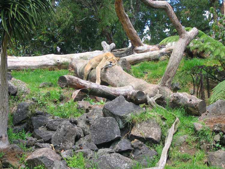Зоопарк в Окленде (Новая Зеландия)