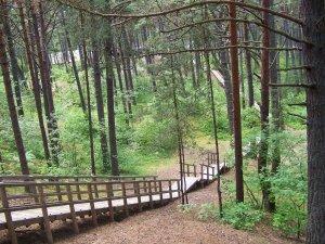 Рага капа — сосновый парк, достопримечательность на севере Юрмалы.
