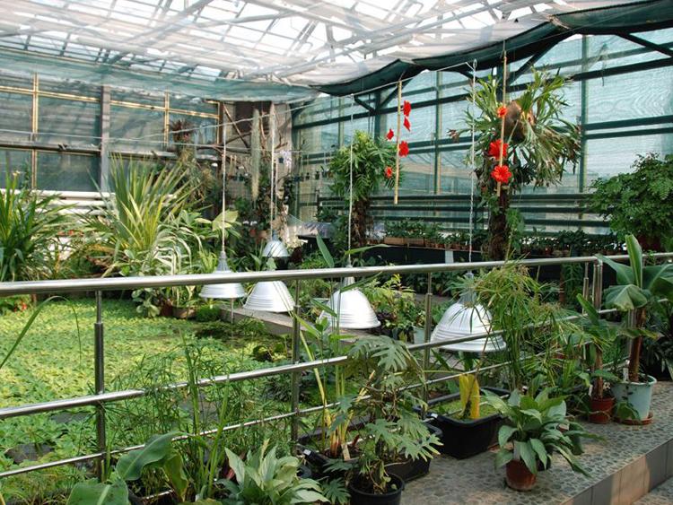 Ботанический сад Черновицкого национального университета