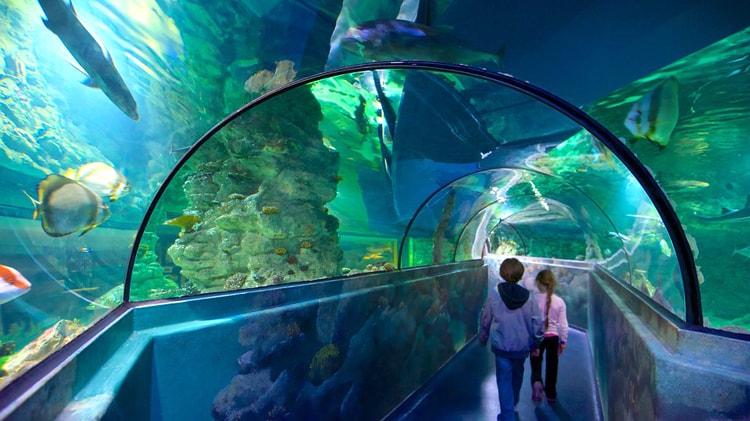 Aquatopia – океанариум в Антверпене.