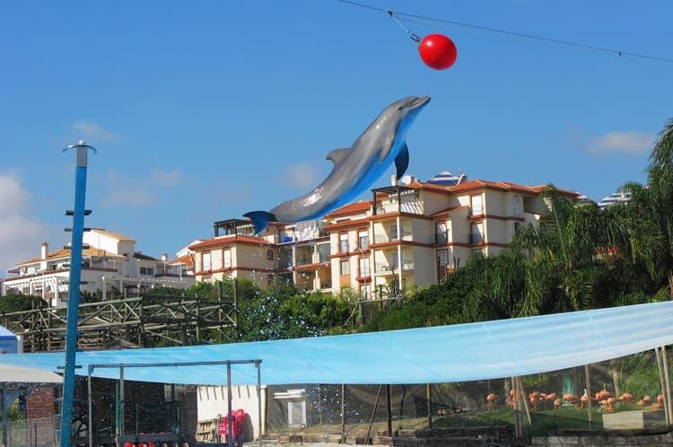 Дельфинарий «Sevo Marina» - достопримечательность в Малагии, где можно отлично провести время с детьми.