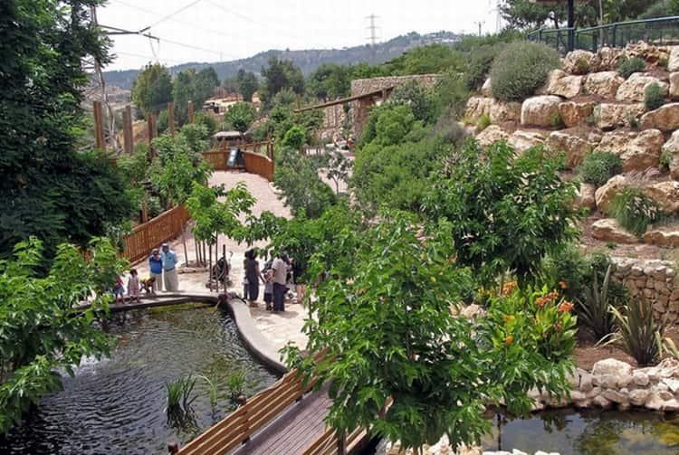 Зоопарк, то место куда нужно сходить с детьми в Иерусалиме.