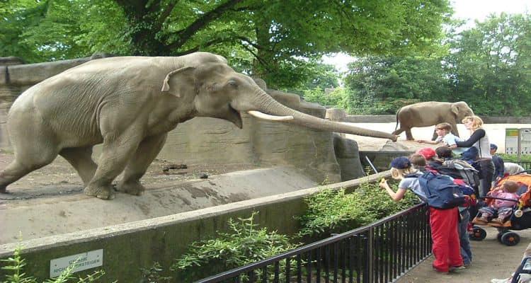 Обязательно посетите с детьми - зоопарк Каунаса.