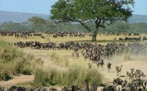 Национальный парк Серенгети расположен в районе Великого Африканского Разлома.