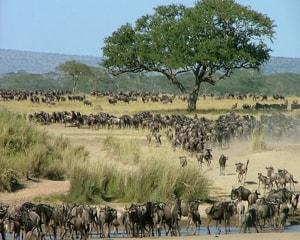 Национальный парк Серенгети в Восточной Африке