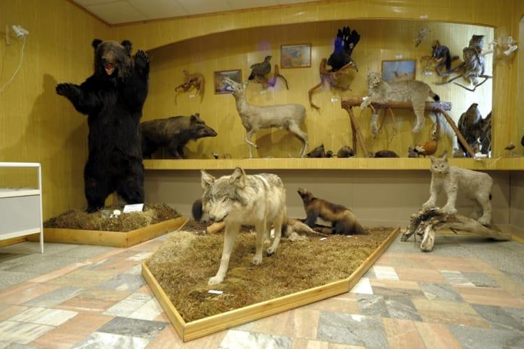 Туристам лучше всего начинать знакомство с заповедником с Музея Природы в Байкальском заповеднике.