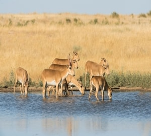 Заповедник Черные Земли – это единственный в России полигон для изучения степных, полупустынных и пустынных ландшафтов.