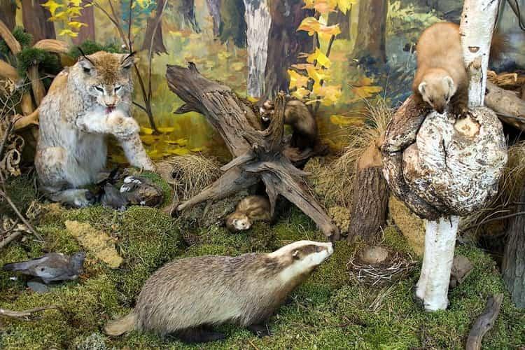 Экспозиция Музея природы в приокском террасном заповеднике