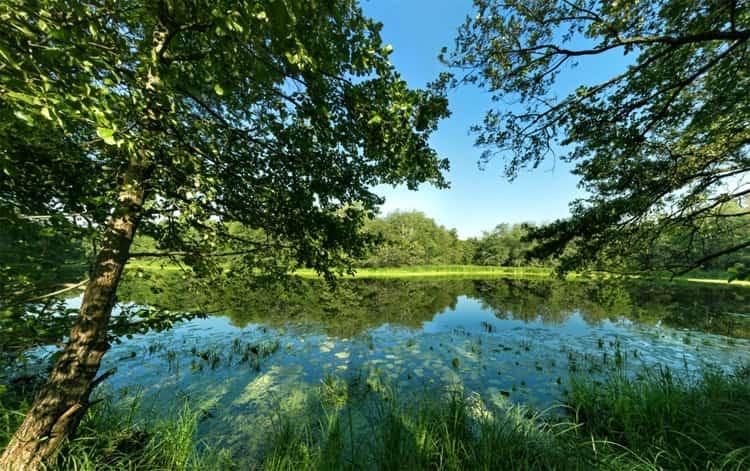 Озеро Чистое в воронежском заповеднике привлекает туристов