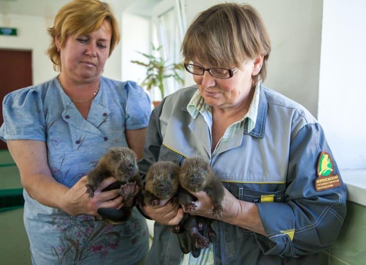 В Бобровом городке животных можно погладить