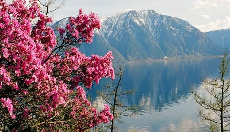 Весной Алтайский заповедник поражает своей красотой
