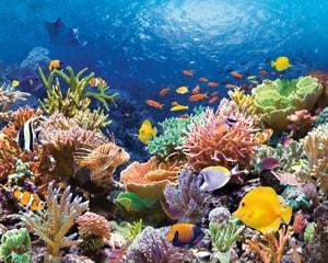 Большой барьерный риф - крупнейший в мире коралловый риф