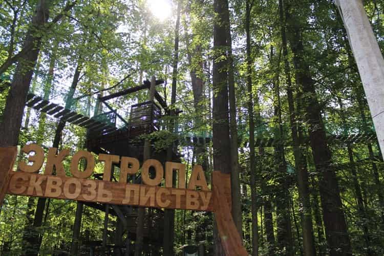 Экотропа Сквозь листву без нанесения вреда деревьям в приокском террасном заповеднике