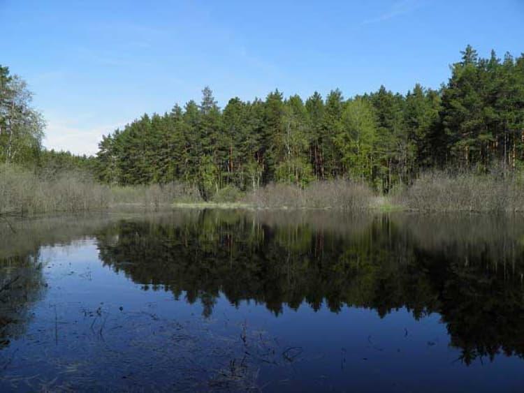 Лесное озеро в приокском террасном заповеднике, где можно приятно отдохнуть