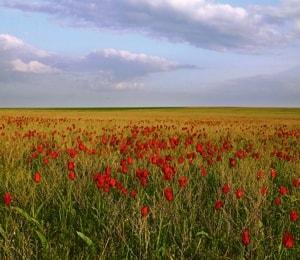 Ростовский заповедник и его природа