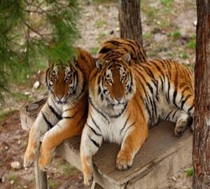 Посетив Сафари парк Геленджик вы будете в восторге от его обитателей