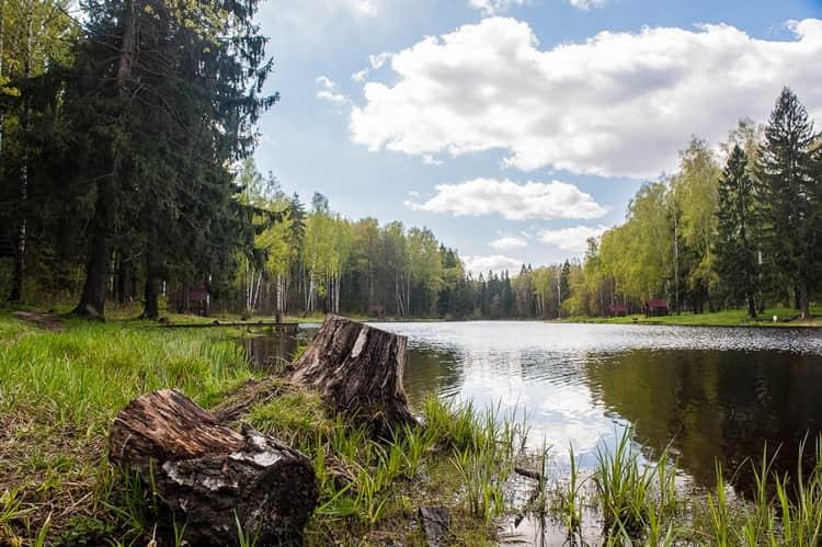Флора национального парка лосиный остров очень разнообразна и в основном представлена лесами
