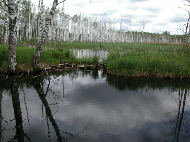 Национальный парк лосиный остров богат такими достопримечательностями - дендрарийв Алексеевской роще